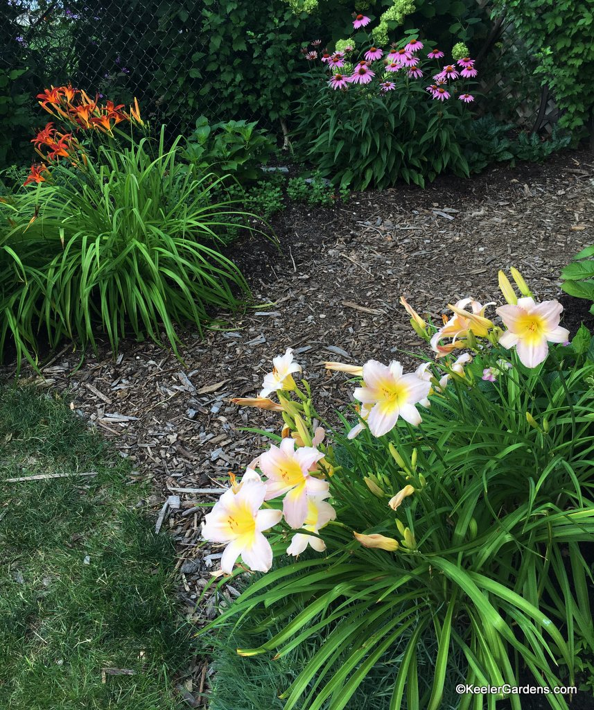 Daylilies and coneflowers encourage us to take a stroll.