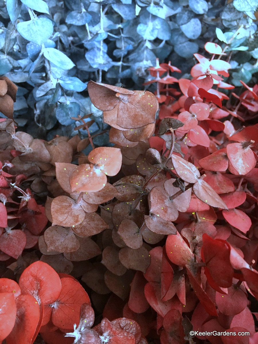 Groups of eucalyptus branches dyed in rich colors of mocha latte, burnt auburn, and deep iced blue.