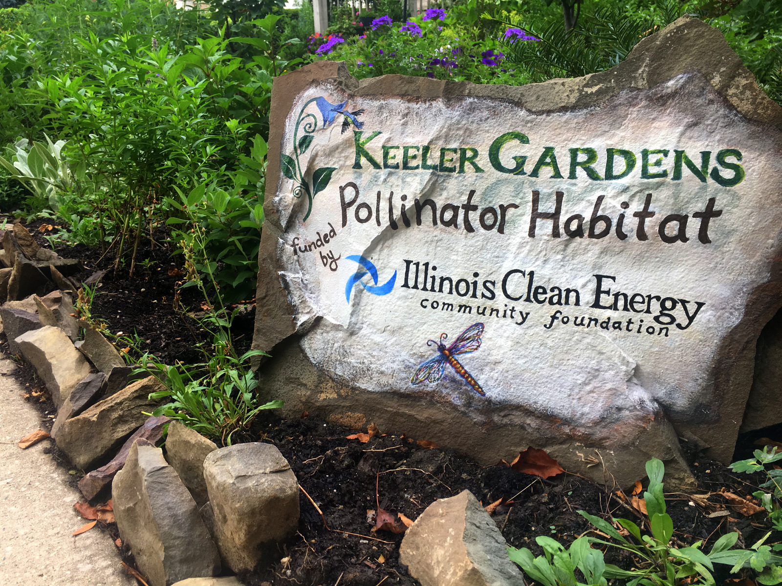 A piece of flat rock is painted with both the Keeler Gardens and Illinois Clean Energy Foundation logos at the start of the pollinator habitat. Painted by In a Jungle, with humming bird, dragon fly, and flower. In the background beautiful purple petunias and verbena appear behind the sign.