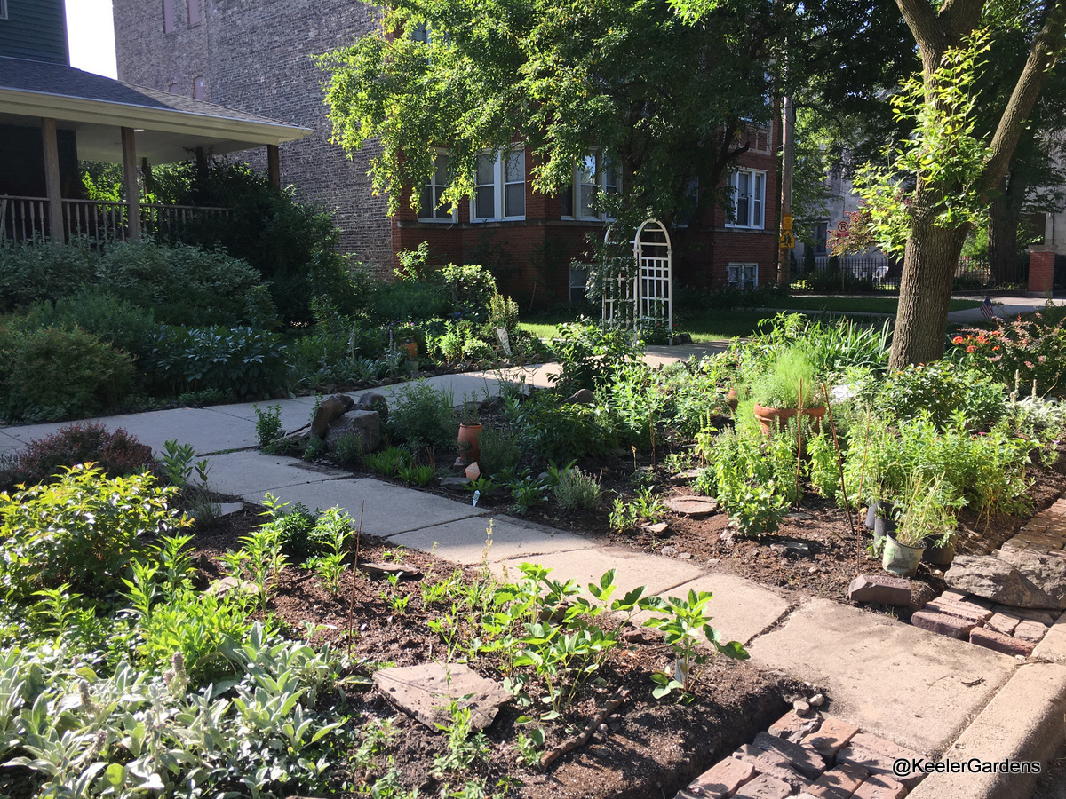 A picture of Keeler Gardens' new pollinator habitat, taken from the curb. In the foreground is the habitat, planted with natives, studded with raised stepping stones, and edged on the street side with an apron made of reclaimed bricks. Keeler Gardens' front garden is visible in the back left with lush vegetation and a small section of the pollinator habitat.